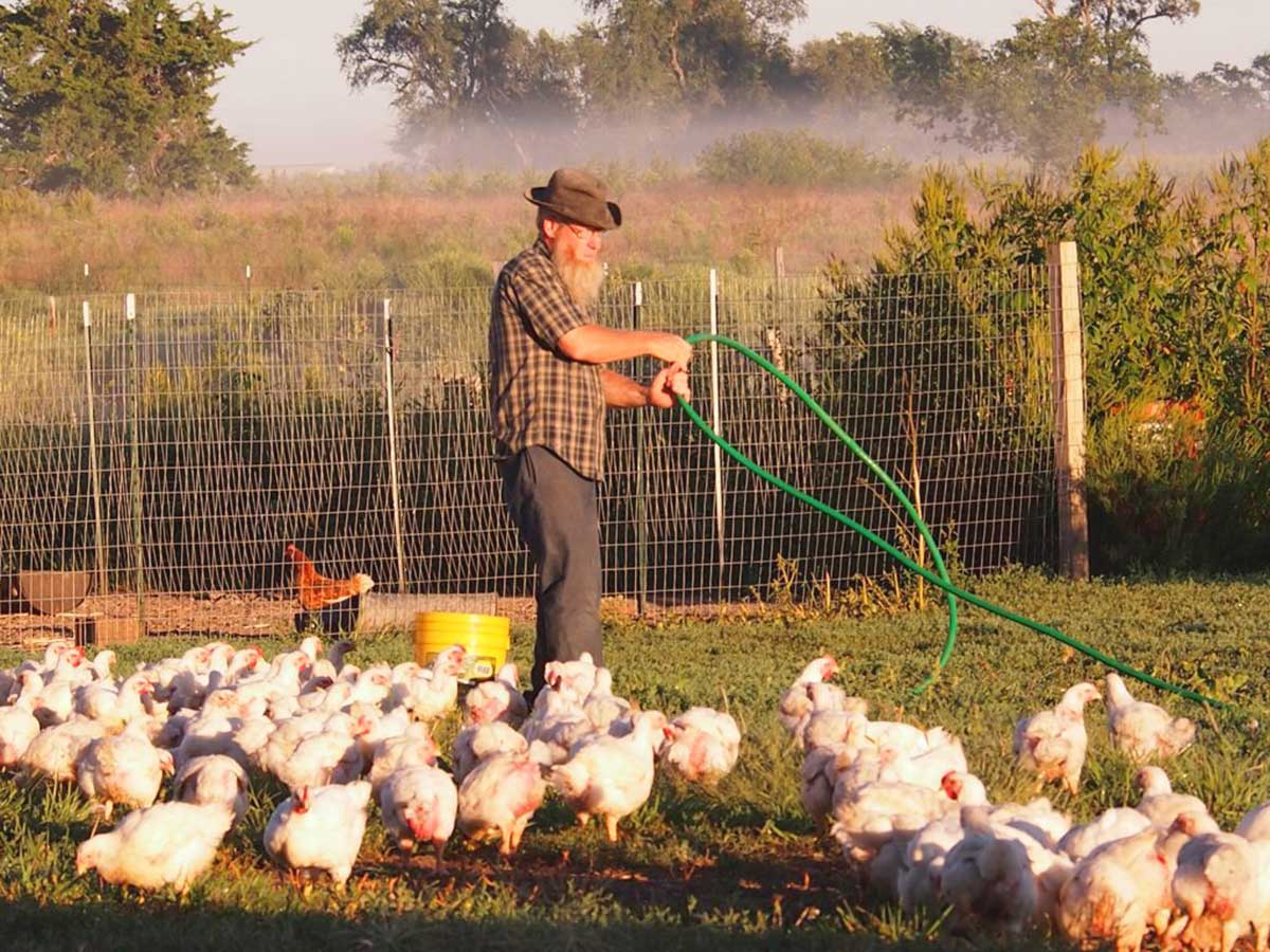 John Bauman and the real free-range chickens (aka pastured poultry).